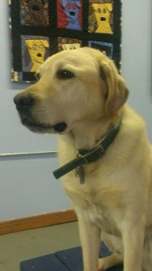 Toby in clinic room