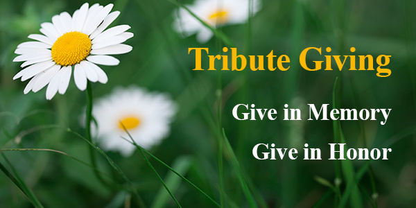 Donation-give